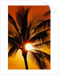 Palm Tree and Sunset by Corbis