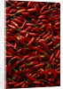 Abundance of Red Chilies by Corbis