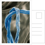 Cotton Fibers by Corbis