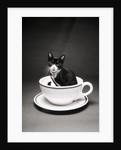 Kitten in a Teacup by Corbis