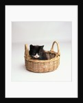 Kitten Sitting in Basket by Corbis