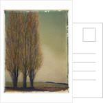Three Poplars by Jennifer Kennard