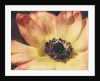Anemone by Jennifer Kennard