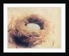Bird's Nest by Jennifer Kennard
