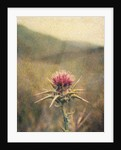 Thistle #2 by Jennifer Kennard