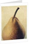 D'Anjou Pear by Jennifer Kennard