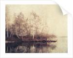 Birch Trees by Jennifer Kennard