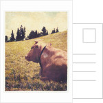 Alpine Cow #2 by Jennifer Kennard