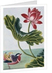 18th Century French Print of Red Water Lily of China II. by Corbis