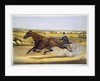 Queen of the Turf, 'Maud S', Driven by W.W. Bair Lithograph by Nicholas Winfield Scott Leighton
