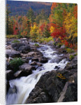Ausable River in Autumn by Corbis