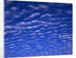 Cirrus Clouds by Corbis