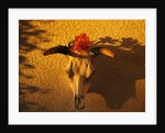 Flowers on a Cattle Skull by Corbis