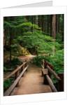 Wooden Bridge Along Sol Duc Falls Trail by Corbis