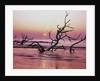 Fallen Oak Silhouette at Sunrise by Corbis