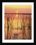 Sun Setting over Lake Hamilton by Corbis