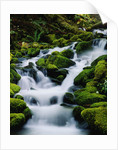 Moss-Covered Boulders at Sol Duc Falls by Corbis