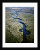 Altamaha River by Corbis