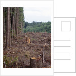 Clearcut in Olympic National Forest by Corbis