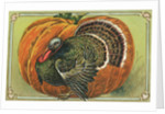 Thanksgiving Greetings Postcard with a Turkey and Pumpkin by Corbis