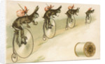J.&P. Coats Trade Card with Rabbits Bicycling by Corbis