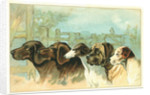 Trade Card with the Profiles of Five Different Dog Breeds by Corbis