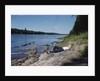 Boy Relaxing by the Delaware River by Corbis