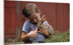 Boy Feeding a Rabbit by Corbis