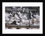 Crates of Chickens by Corbis