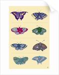 Butterflies by Steve Collier