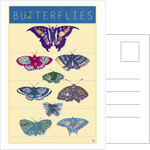 Butterflies by Steve Collier