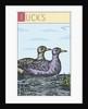Ducks by Steve Collier