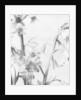 Bell Flower by David Roseburg