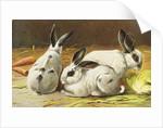 German Postcard Depicting Three Rabbits by Corbis
