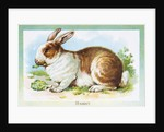 Postcard Depicting a Rabbit Eating Lettuce by Corbis