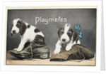 Playmates Postcard by Corbis