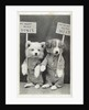 We Want More Bones, We Want More Meat Photographic Postcard by Corbis