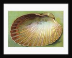 Souvenir From Postcard with Clam Shell by Corbis
