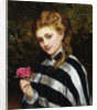 The Red Rose by Charles Sillen Lidderdale