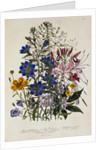 Linum Usitatissimum Botanical Illustration by Corbis
