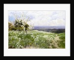 Spring Blossom by John Clayton Adams