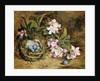 Apple Blossom and a Bird's Nest by H. Barnard Grey