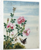 Early 19th-Century Chinese Watercolor of Pink Roses by Corbis