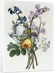 Bouquet of Rose, Narcissus and Hyacinth by Jean Louis Prevost