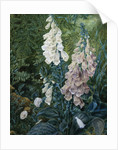 A Still Life of Foxgloves by Mary Margetts