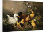 A Family of Ducks on the Riverbank by Walter Watson