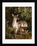A Doe with Her Fawn by Samuel John Carter