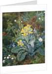 A Still Life of Polyanthus and Butterfly by Mary Margetts
