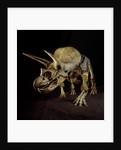 Triceratops Skeleton by Corbis