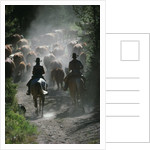 Driving Cattle at Bar Cross Ranch by Corbis